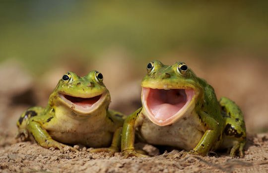 Funny-Frog-Picture-18-of-22